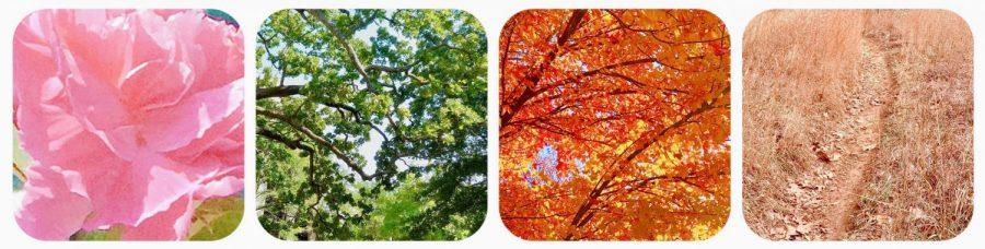Color+of+Seasons